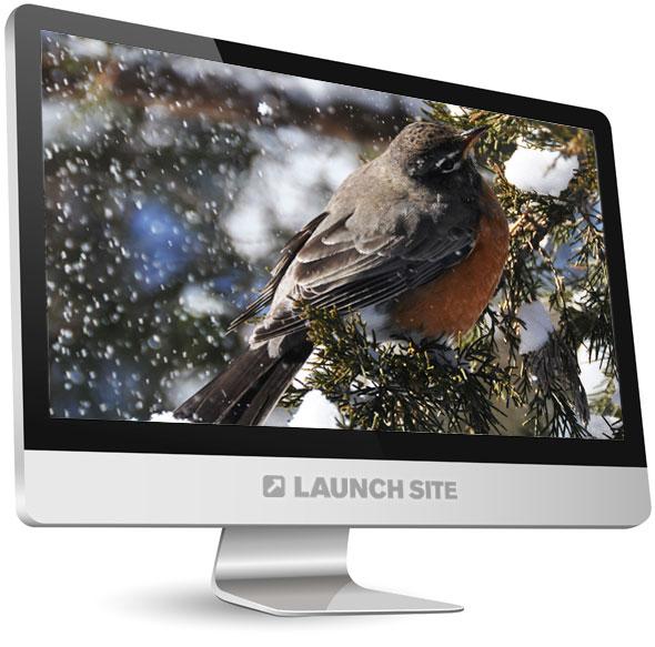 Full Screen Photography Winter Birds